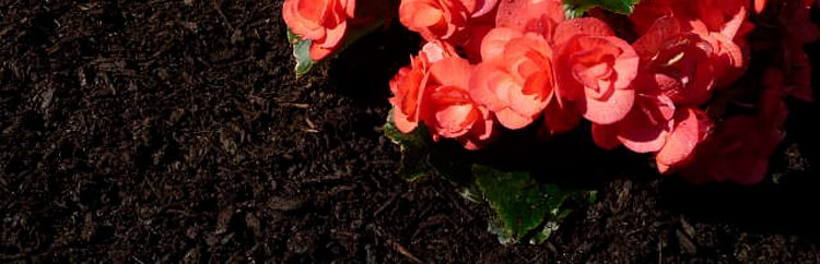 Mulch coloring solutions for Landscape projects
